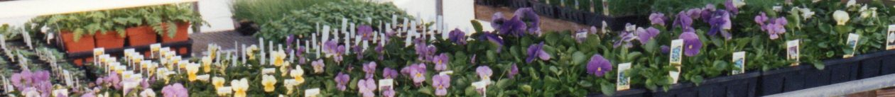 Griff's Greenhouses